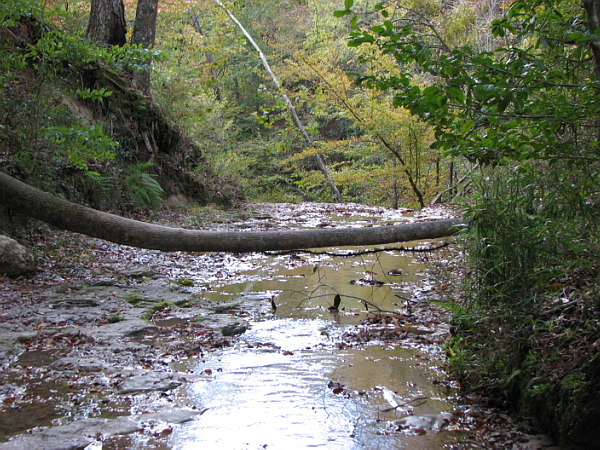 Clark Creek Natural Area 45