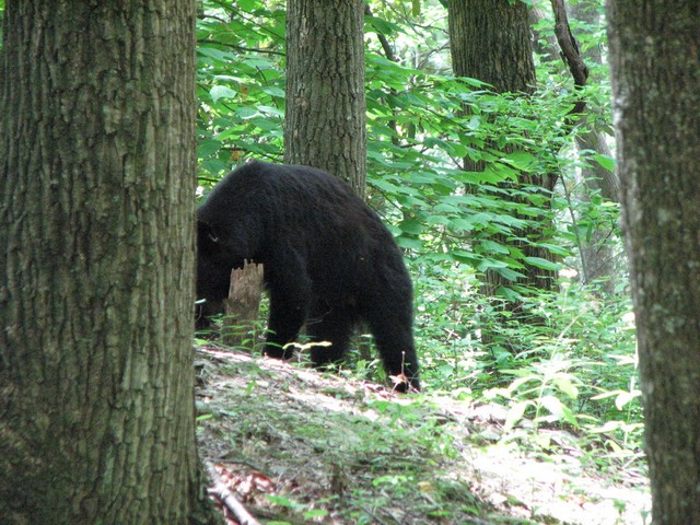 Gatlinburg 8-11-08 15