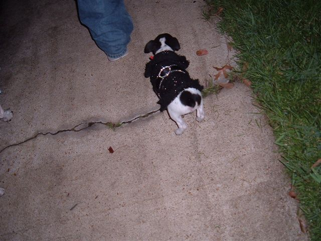 Halloween 2006    32
