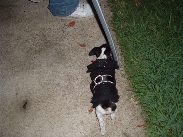 Halloween 2006    33