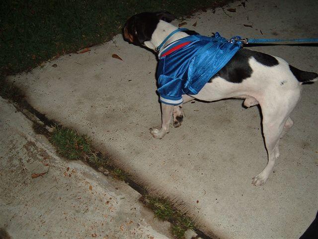 Halloween 2006    36