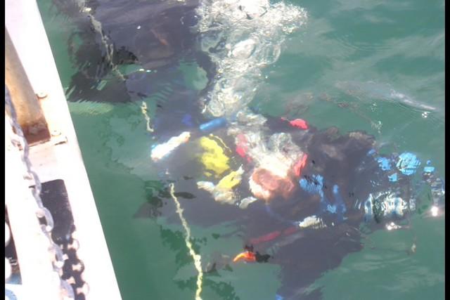 Pete Tide Check Out Dive 52