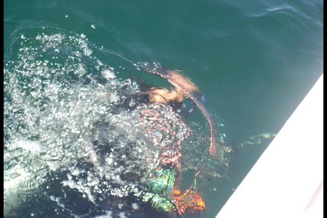 Pete Tide Check Out Dive 62
