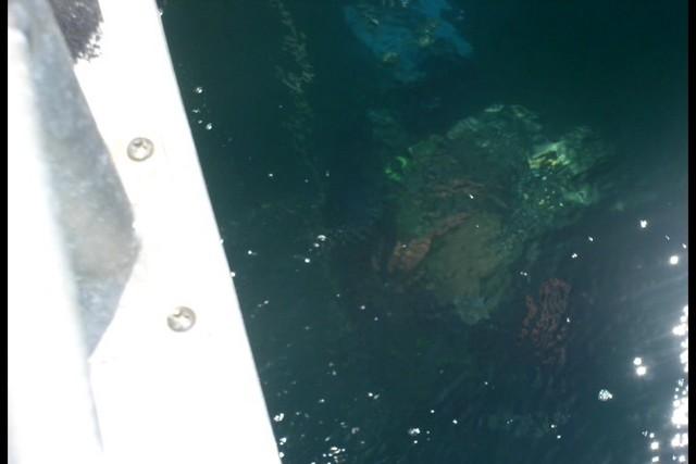 Pete Tide Check Out Dive 64