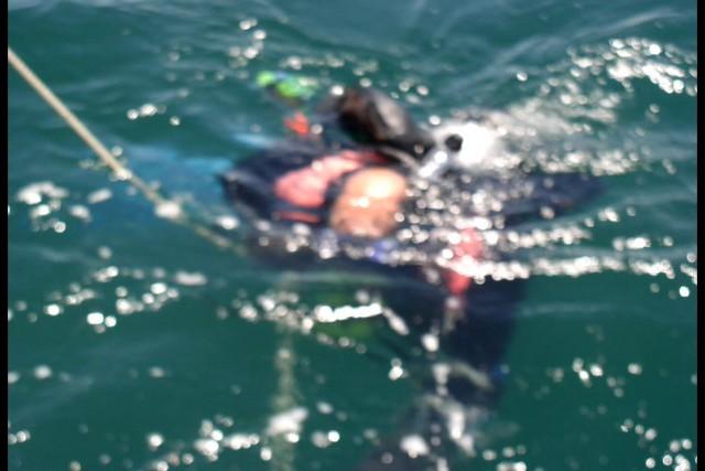 Pete Tide Check Out Dive 65