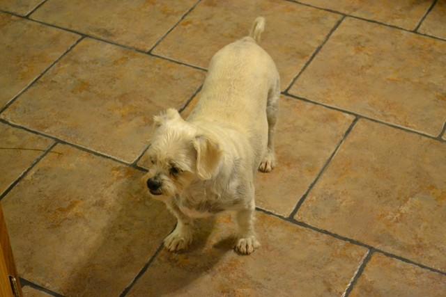 Rat Shitz Puppies  2011 (1)