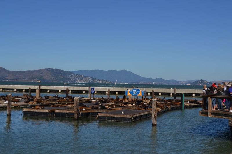 San Francisco Father-Son Trip 9-2013 (276) [800x600]