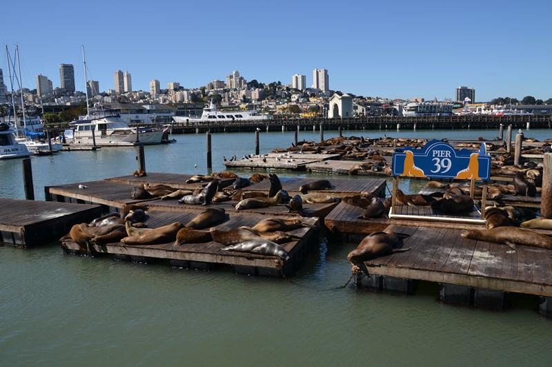 San Francisco Father-Son Trip 9-2013 (294) [800x600]