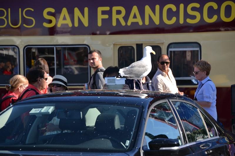 San Francisco Father-Son Trip 9-2013 (471) [800x600]