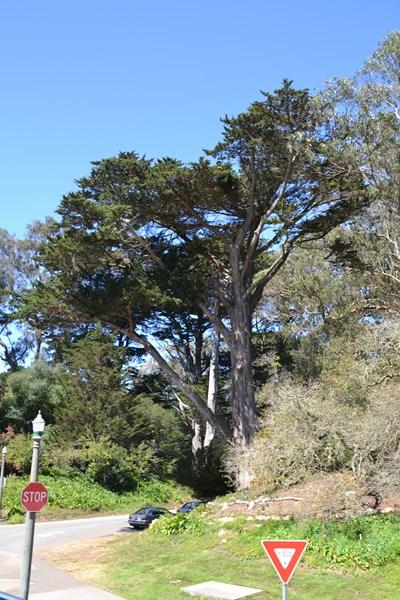 San Francisco Father-Son Trip 9-2013 (616) [800x600]